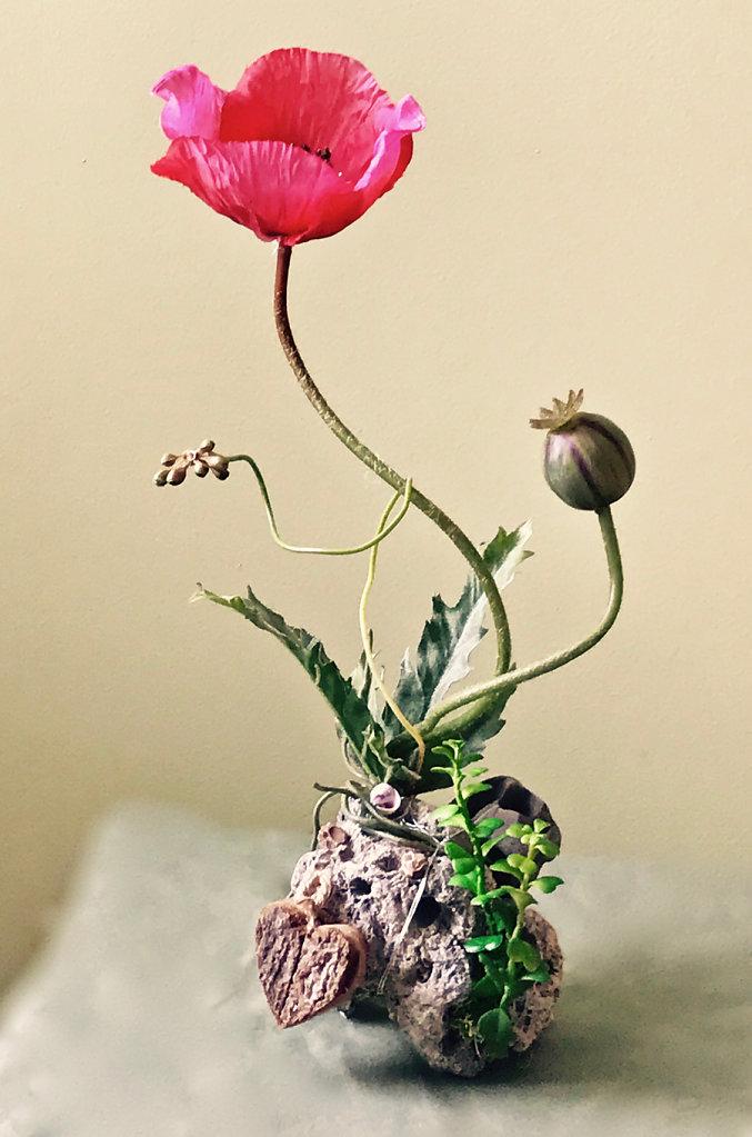 Hot pink poppy in seaside rock